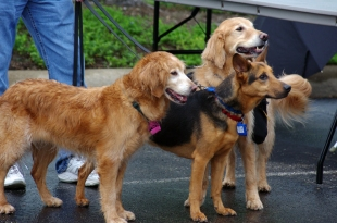 Dogs_Blog