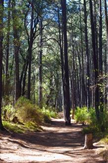 The Path_blog