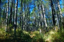 Woods_blog